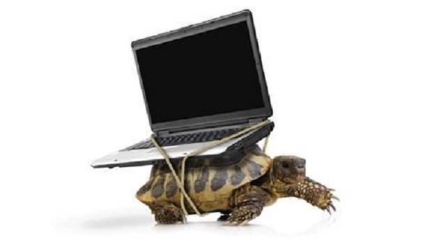Imagen muestra una tortuga cargando un computador portátil.